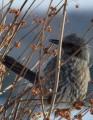 bird-409071