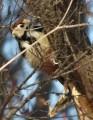 bird15-0376731