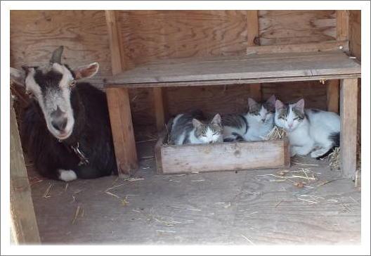 ユキチャンと猫達1