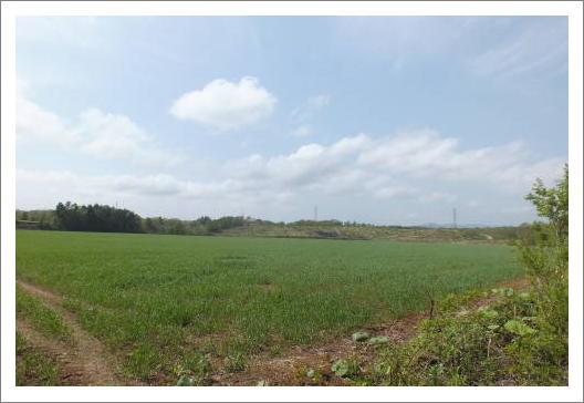 安平町の風景
