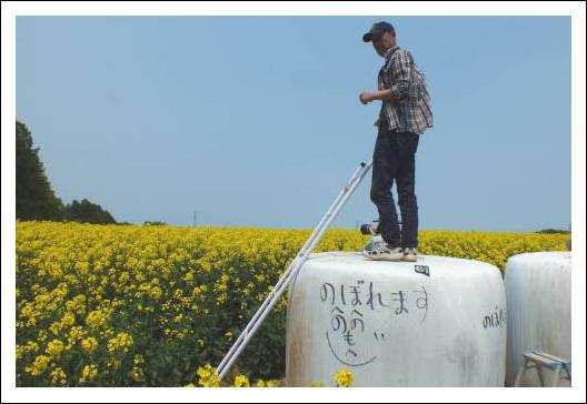 安平町の菜の花畑3