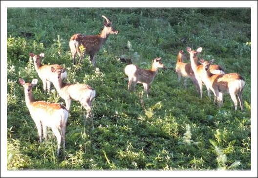 鹿の家族1