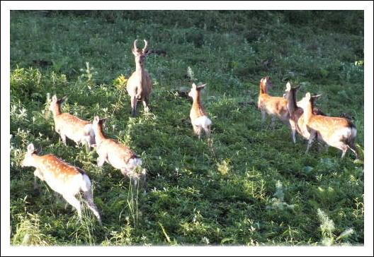 鹿の家族2