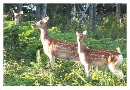 鹿の家族3