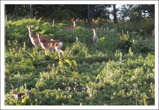 鹿の家族4