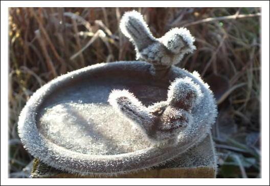 バードテーブルの霜