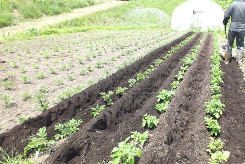 farmnote17-0347061