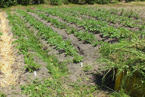 farmnote17-0281047