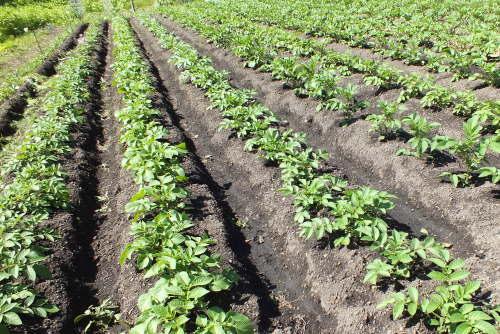 farmnote17-0790168