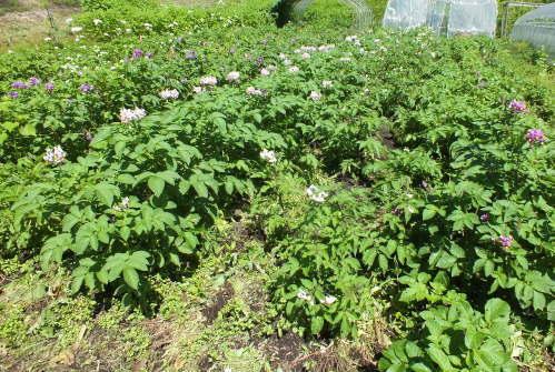 farmnote19-0851154