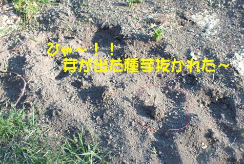 farmnote2021-0494071
