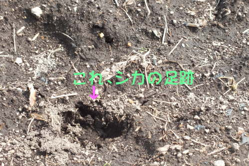 farmnote2021-0562079